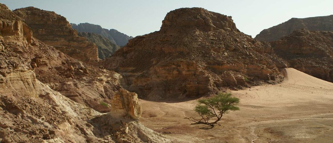 A Team of Maverick Engineers Want to Roll the Geological Clock Back on Sinai and Replace Desert with Lush Greenery